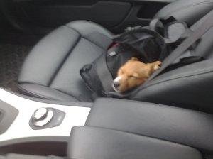 Älskar att sova i bilen