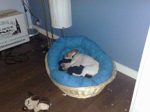 Gillar min nya säng